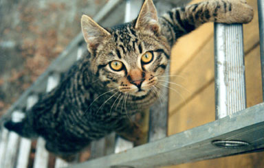 Ladder Cat