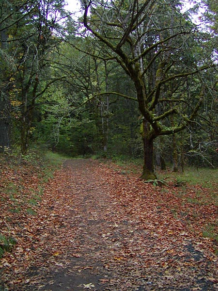 Chip Ross Trail
