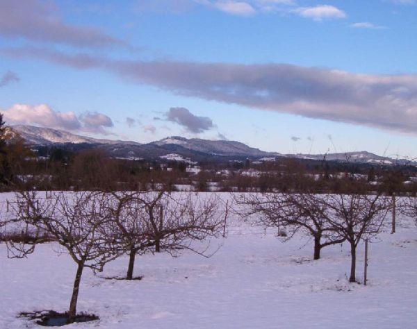 Yuletide Snow