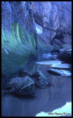 Algae Walls