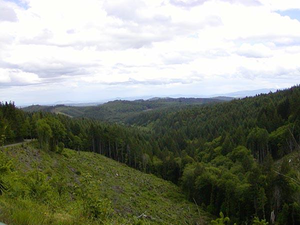 Alsea View