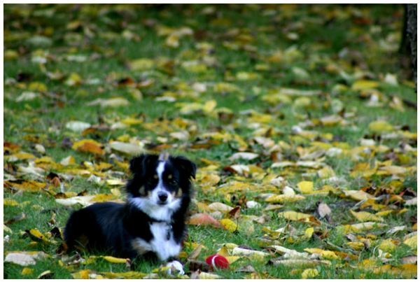 luna in leaves