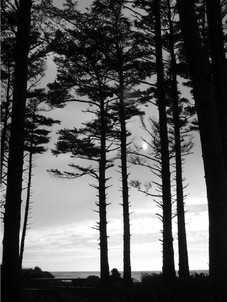 Tillamook Trees