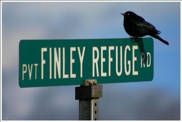 Finley Refuge