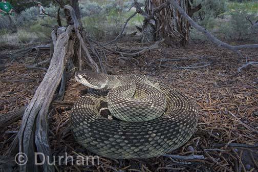 Snake Story
