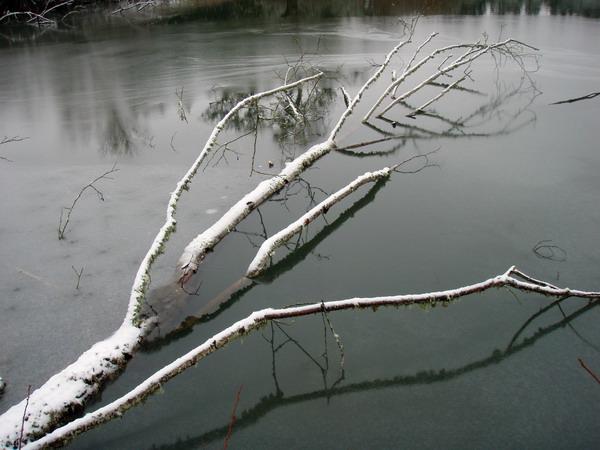 Alive dead tree