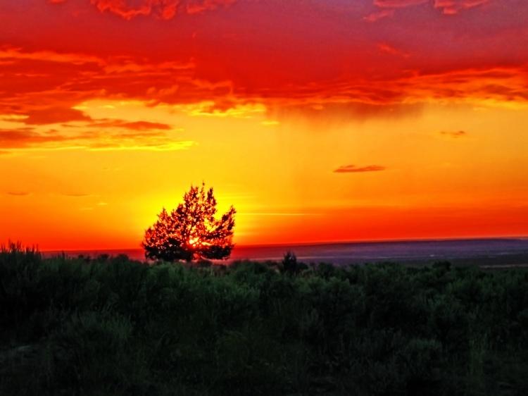 The Burning Bush of Eastern Oregon