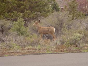 Deer & Sage