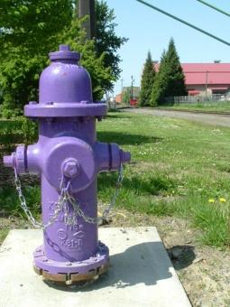 Purple Hydrant