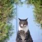 Centerpiece Cat