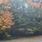 fall blur on 26
