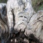 The Tree Wizard