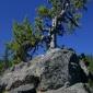 Sparks Tree