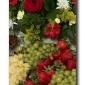 Fruit N Flowers