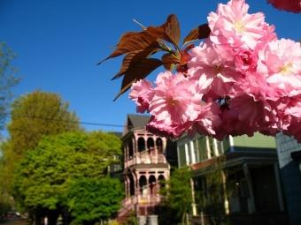 Springtime in NW Portland
