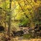 Lithia Creek in the fall