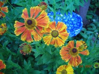 Anita's Garden...